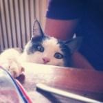 Was Übersetzungen mit Katzenfutter zu tun haben