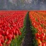 Warum spielen die Niederlande in leuchtend orangen Trikots?