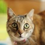 Wie aus Fröschen Katzen werden