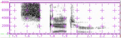 spectograph