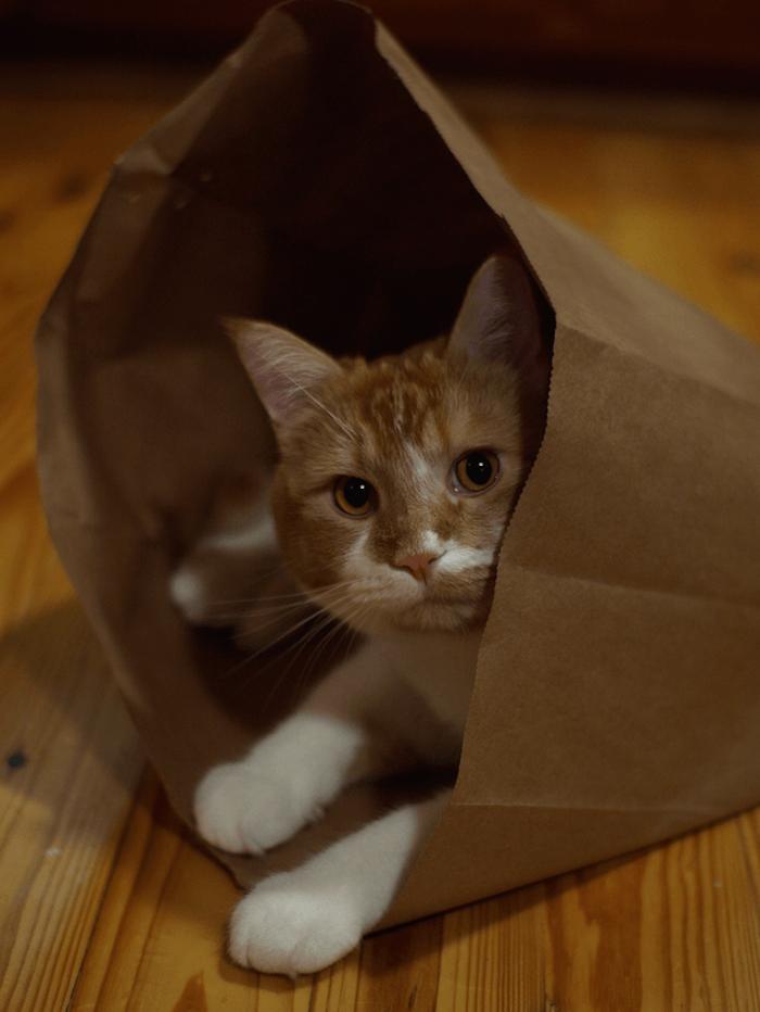 cats-bag-translation-supertext