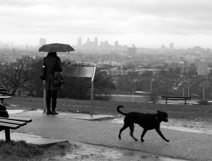 supertext-raining-cats-and-dogs-translation