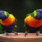 Tierisch gute Unterhaltung: Wie kommunizieren Tiere?