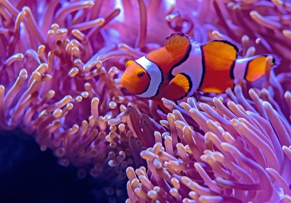 Finding Nemo Reporting